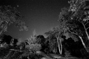 Erica night Sky © Itan Lyons