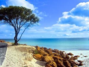 beach-scape